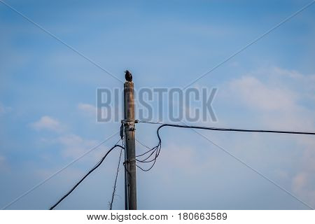 Large black crow perched on top of a concrete telephone pole with a soft blue sky in the background