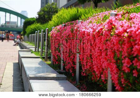 A flowerbed beside a sidewalk along a river