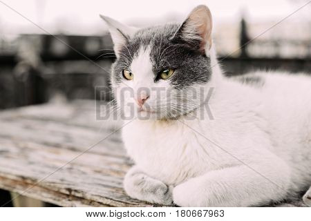 White calm homeless cat with green eyes lying on table outdoors and looking at the left copy space