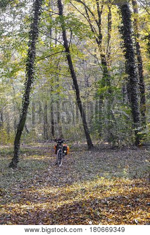 Monza (Brianza Lombardy Italy): the park at fall (october) and a bicycle with bags