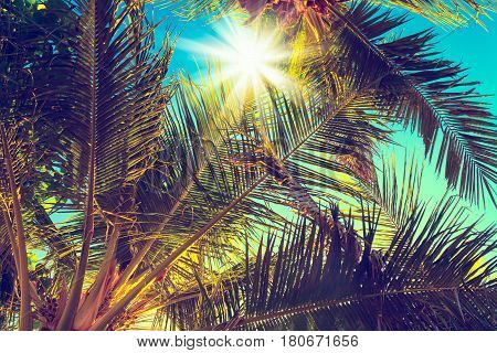 Vintage coconut palm tree on sky background - Vintage Filter