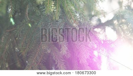 closeup shot of green fir sways on wind in spring sunny morning with light leaks, 4k photo