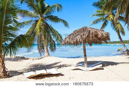 Coconut Palms, Empty Loungers, Saona