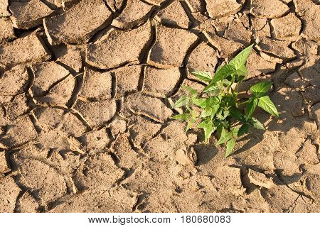 Nature small plant on cracked land background