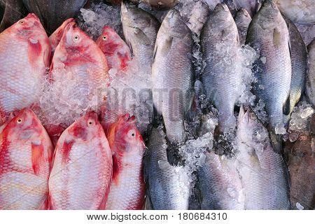 fresh fish at fish market in sea shore,Thailand