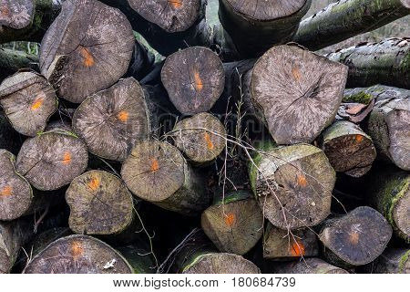 Chopped Logs Marked Industry Transportation Forest Deforestation Texture