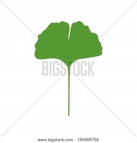 Isolated one color green silhouette of leaf of ginkgo biloba on white background