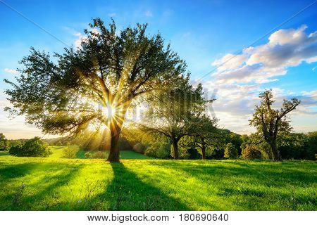 The sun shining through a tree on a green meadow a vibrant rural landscape with blue sky before sunset