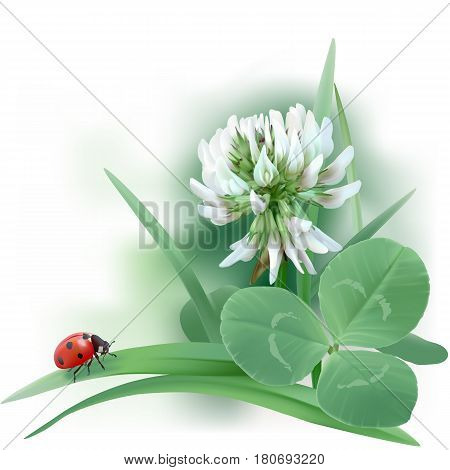 White Clover - Trifolium. Hand drawn vector illustration of a white clover flower, ladybug, and leaves mixed with grass blades, on white background.