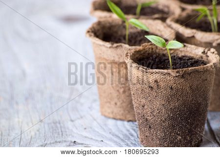 Preparation for work in the garden. Seedling in peat pots.