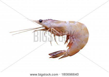Fresh Whiteleg Shrimp, Pacific White Shrimp Isolated On White Background