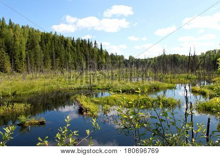 Russia. Karelia. Bog with blue water and forest on blue sky background. Horizontal view