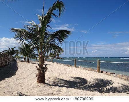 Palm tree on sandy beach in a light ocean breeze. Jamaica