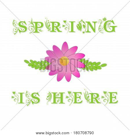 Spring flowers with green leaves and text Spring is here on white background