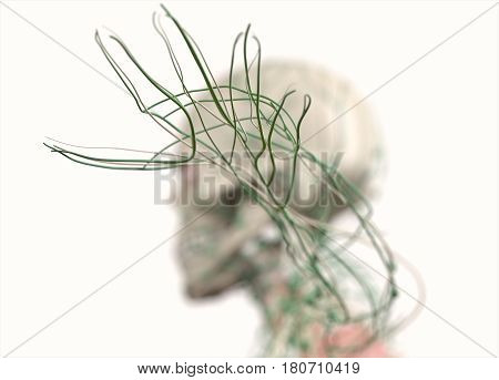 Anatomy illustration showing lymph nodes in hands and arm. 3d illustration