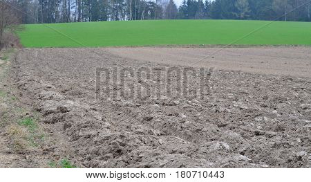 view of spring sown fields NiederOstereich Austria