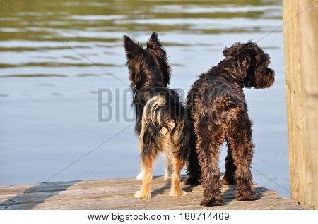 Picture taken on the edge of a lake or the two dogs were waiting for their master.