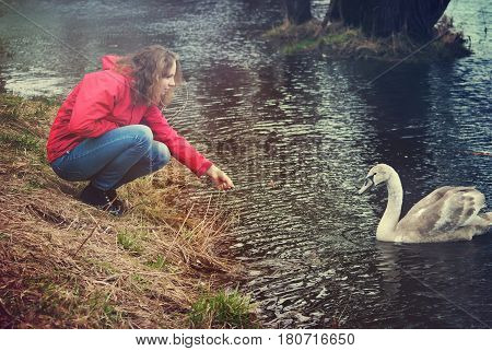 Girl playing with a swan on a walk by the river