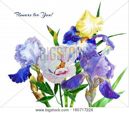 Blue irises. Hand painted watercolor flowers. Botanical elements for illustrations and greeting cards