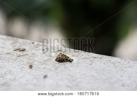 Bird Dropping On The Floor With Copy Space