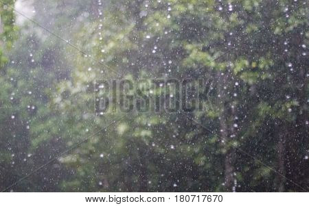 Blurred of rain with forest background. Abstract soft focus of rain with tree background.