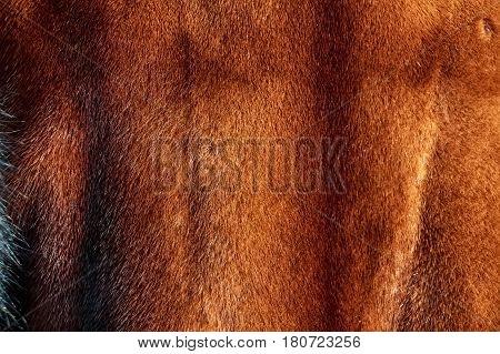 Closeup of brown fur coat with short fur