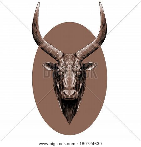 the head of a bull with large horns symmetrical sketch vector graphics black and white pattern on a brown background oval
