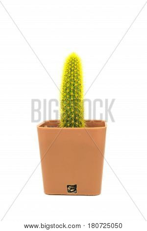 Single Cactus Isolated On White Background.
