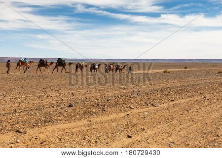 caravan of camels in the Sahara desert, Morocco