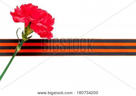 Red carnation with George ribbon isolated on the white background. Victory Day 9 May concept. 9 May still life isolated on white. Concept of 9 May