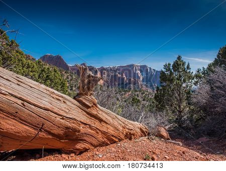Downed Tree in Kolob Canyon with snow capped mountains in past