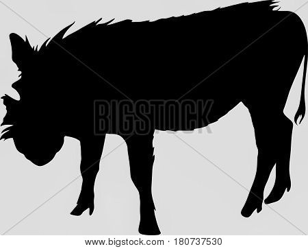 Hand drawn silhouette of a wild warthog - Illustration, black isolated on white background