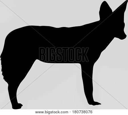 Hand drawn silhouette of a wild black backed jackal - Illustration, black isolated on white background