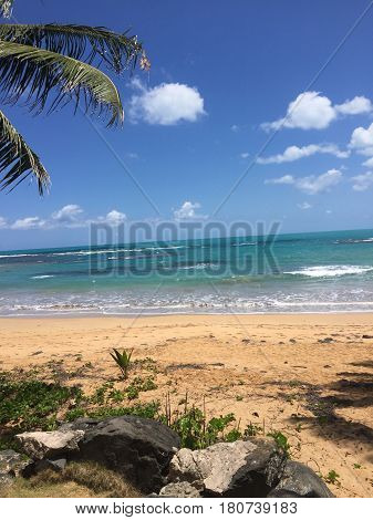 palm tree in Playa Balneario La Monserrate beach, Puerto Rico