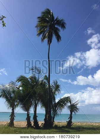 palm trees, Luquillo beach in Puerto Rico