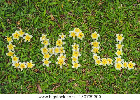 Inscription Chill On The Grass. Flowers Frangipani