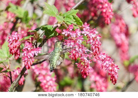 small green hummingbird bird near the flowers on blury background