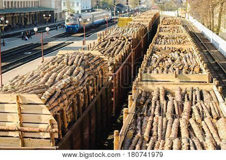 Environment, Nature And Deforestation Forest - Felling Of Trees. The Concept Of A Global Problem. Fr