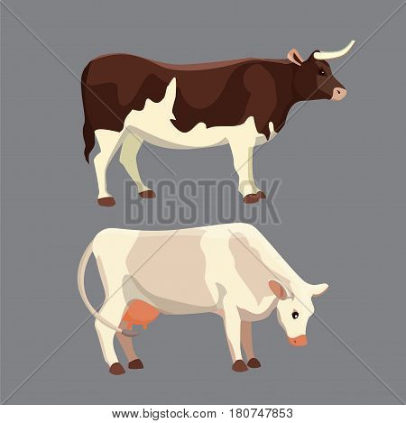 different cows, isolated Vector illustration. Mammal funny animals. Set cow and bull