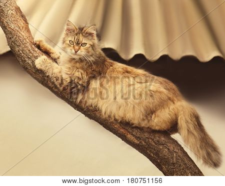 Cat lying on tree branch outdoor