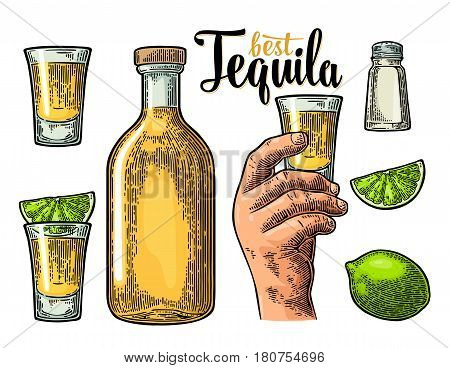 Set for tequila. Hand holding and clinking glass bottle salt lime whole and slice. Vintage color vector engraving illustration for poster invitation to party. Isolated on white background