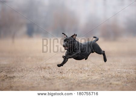 Dog Running And Playing In The Park