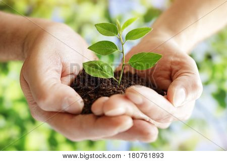 Taking care of new development hands holding new life plant