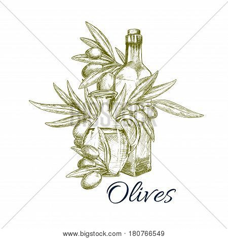 Sketch olives and olive oil bottle and pitcher. Vector icon or emblem of green olive-tree branch for culinary cooking seasoning product emblem or salad dressing ingredient and condiment