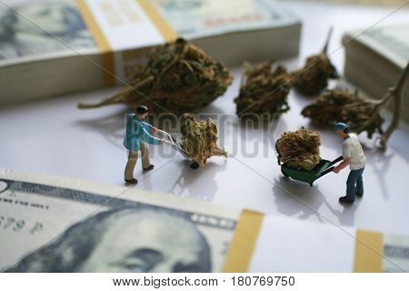 Cannabis ( Men Moving Buds Around With Money ) High Quality
