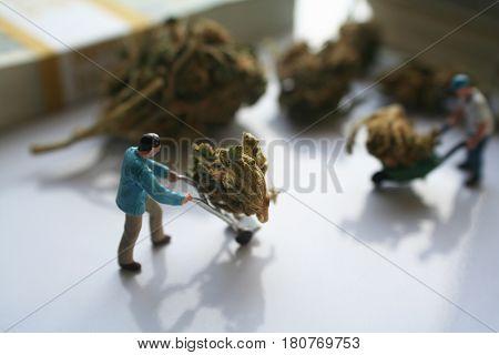 Marijuana ( Men Moving Buds Around ) High Quality