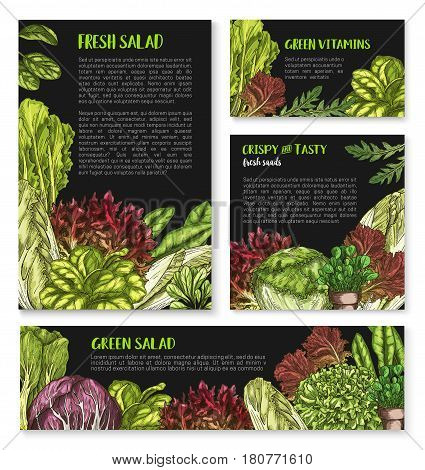 Lettuce salads vector posters templates. Vegetarian food leafy vegetables of chicory and watercress, sorrel and gotukola collard. Farm fresh oakleaf lettuce, arugual and iceberg or pak choi salad