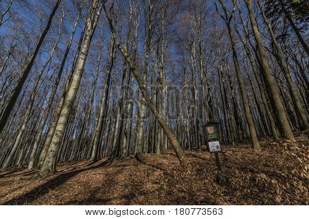 Beech tree forest in national park in north Bohemia