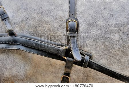 Harnesses For Horses