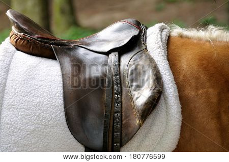 Saddle and stirrup horse close up .